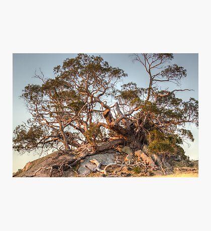 The Tree of Rock Photographic Print