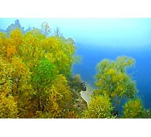 Autumn landscape, trees in a fog Photographic Print