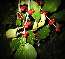 Berries at Night by Tracy DeVore