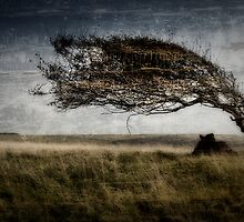 Cuckmere Tree by JayteaUK