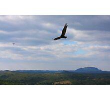 Turkey Vulture Landscape........ Photographic Print