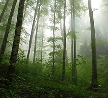 The Quiet Forest by PPDesigns