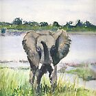 Elephant by J-C Saint-Pô
