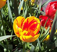 SF Tulips by CherylBee