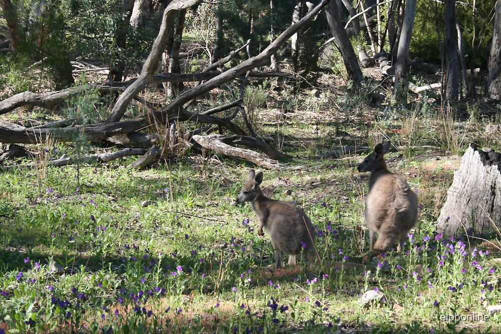 Kangaroos in the bush. by elphonline