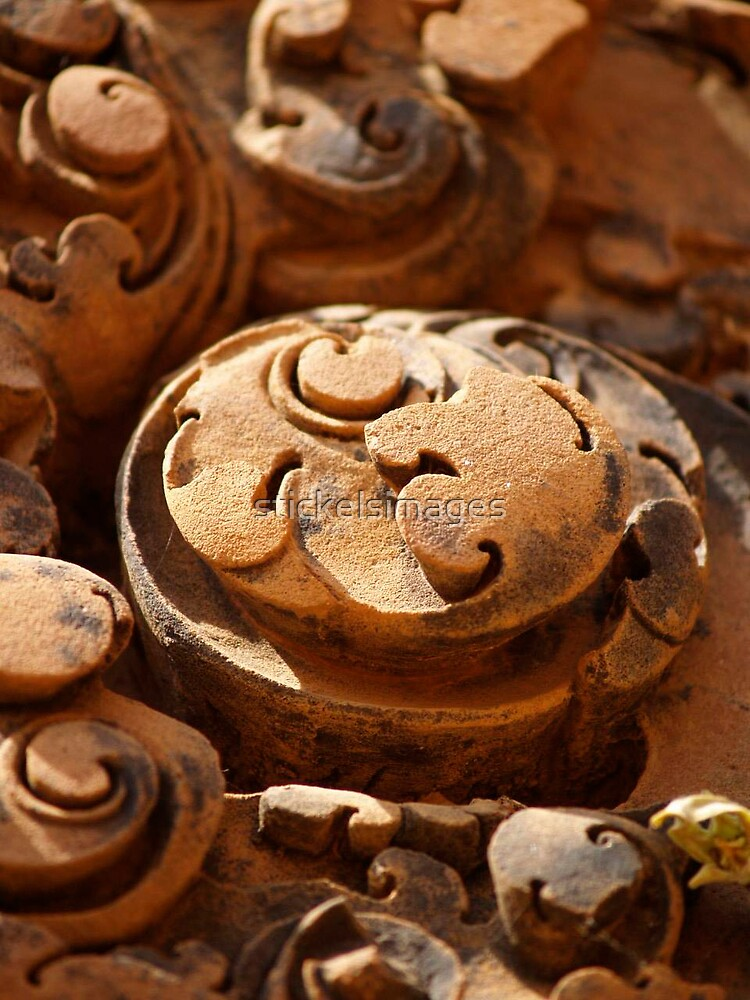 rosette by stickelsimages