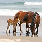 Family of Wild Horses on the Beach by Karl R. Martin
