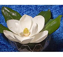 Magnolia on Blue Photographic Print