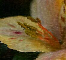 Flower In Ripples by Deborah  Benoit