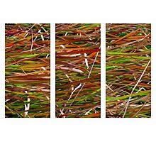 Wild Grass Triptych Photographic Print