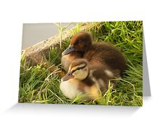 Little Quackers Greeting Card