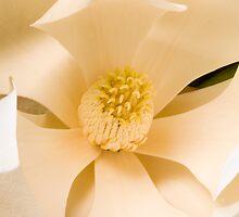 Magnolia by Joshua Rablin