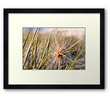 Beach Plant Framed Print