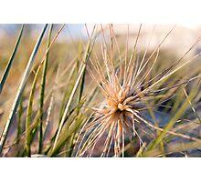 Beach Plant Photographic Print