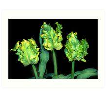 Genetical manipulated tulips Art Print