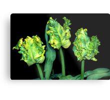 Genetical manipulated tulips Metal Print