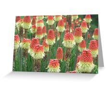 Torch Lilies Greeting Card