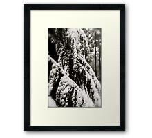 Draped in Splendor Framed Print