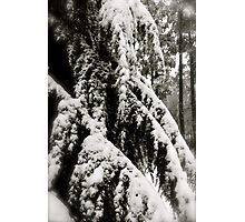 Draped in Splendor Photographic Print