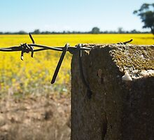 Golden Fields and Fences by metafourstudio