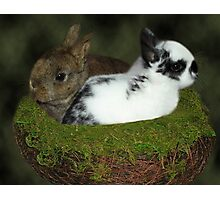 DWARF RABBITS PICTURE  Photographic Print