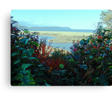 Cape North and Marshlands Canvas Print