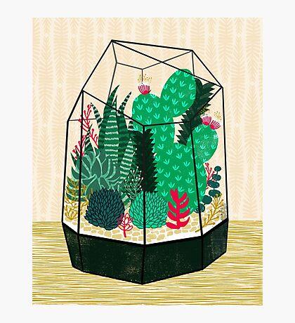 Terrarium - Geodesic Plant for Succulents and Cactus by Andrea Lauren Photographic Print