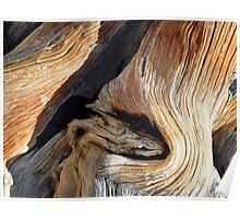 Juniper Tree Trunk Whorl Nature Abstract Poster