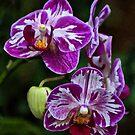 Purple Orchids by Sandy Keeton