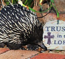 Echidna - Trust in the Lord by Stephen Balson