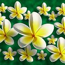 Frangipani 3D by Keith G. Hawley