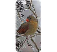 Cardinal on Icy Branches iPhone Case/Skin