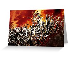 Fire in the corn field Greeting Card