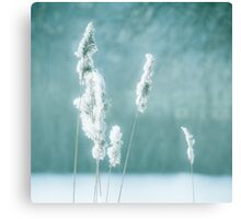 Soft winter reed Canvas Print