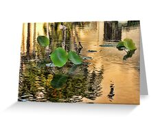 Lonley Lilly Pads Greeting Card
