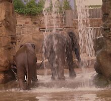 Elephant Shower by Franco De Luca Calce