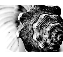 Shell Photographic Print