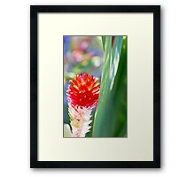 Color My World... Framed Print