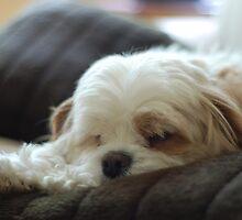 Scruff, the walking cushion by Kotchka Images