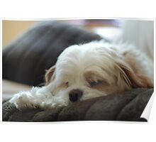 Scruff, the walking cushion Poster