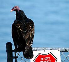 Turkey Buzzard by Clayton Bruster