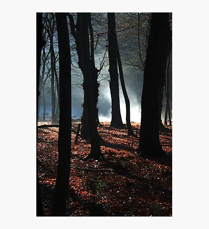 mystery in the woods Photographic Print