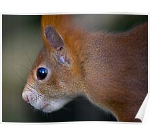 Squirrel-Eye View Poster