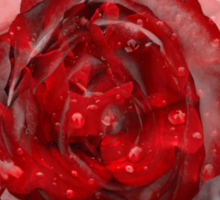 Red rose and grey background Sticker