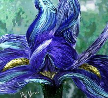 Iris bloom by Penny Ward Marcus