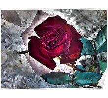 Multiexposure Red rose 2 Poster