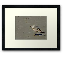Where Are My Friends Gone ? Framed Print