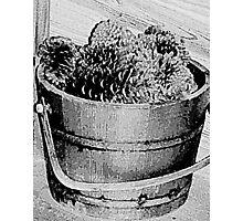Basket Full of Cones - Pencil Sketch Photographic Print