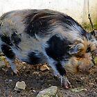Large Pig.......... by lynn carter