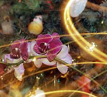 Orchid and Christmas tree by Robert Deaton